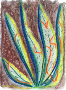 color drawing of desert plant